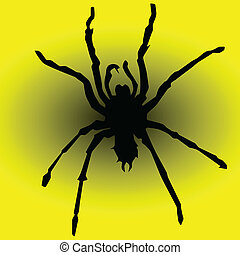 spider in yellow illustration