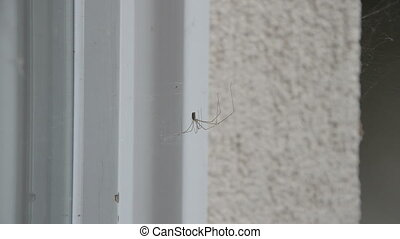 Spider is Resting on a Cobweb - Close-up of a spider resting...