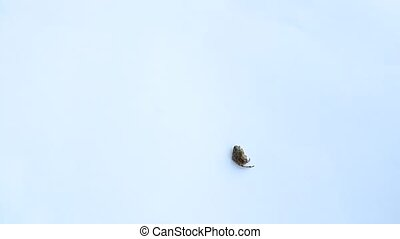 Spider lies low immovably, then stands up and runs away -...