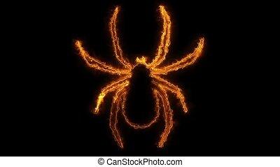 Spider Loop