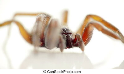 Spider, macro - Closeup macro of spider on white isolated ...