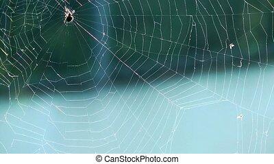 Spider Macro View
