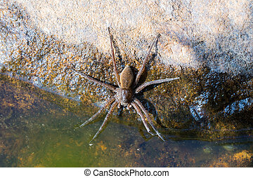 spider near water