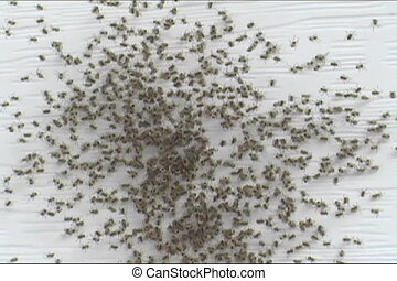Spider nest - Spiders scattered after nest is disturbed