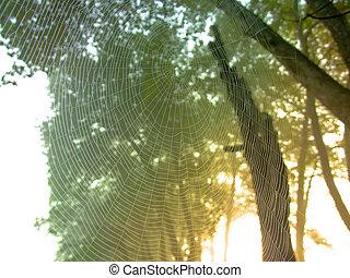 spider net at dawn