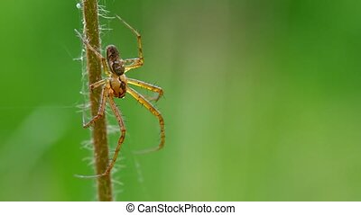 Spider on a blade of grass