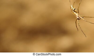 Spider on a branch