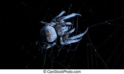 Spider on a night ambush on a cobweb
