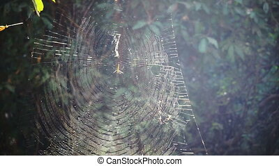 Spider on full web in forest sunshine