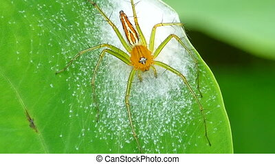 Spider on grass