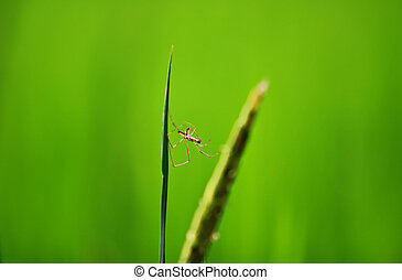 spider on green background