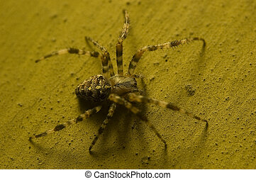 Spider on old wall