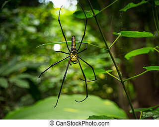 Spider on spider web in the forest