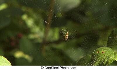 Spider on Spiderweb Blowing in Wind - Steady close up shot...