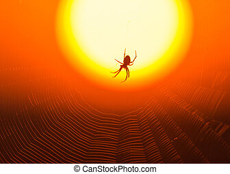 Spider on the background of a golden sunset