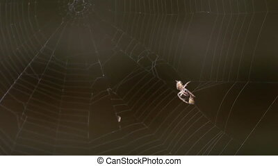Spider on the web, eats prey