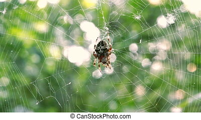 Spider on the web in the forest
