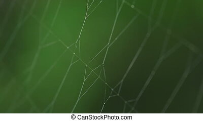 Spider on the web, rack focus