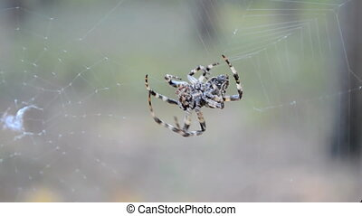 spider on the web, summer
