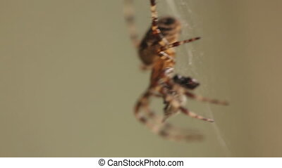 Spider on web close up