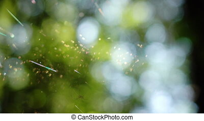Spider on web in bright sunshine out of focus