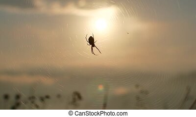 spider on web sunset backlit time lapse sun goes down 4k