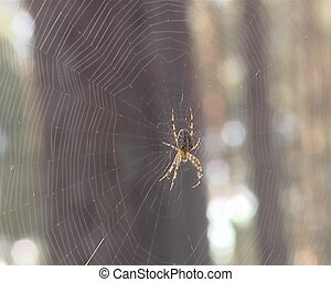spider on web tree