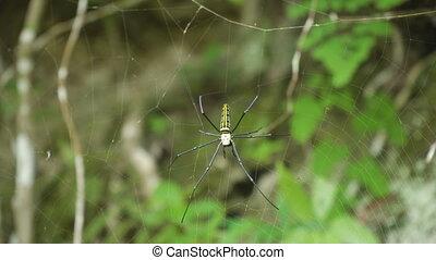 Spider on web.