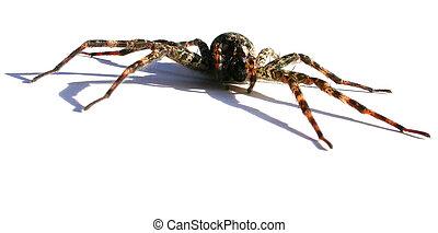 Spider - predator