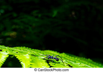 Spider silhouette on green Fern leaf With light passing through