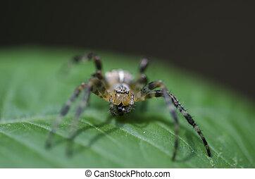 Spider sitting on a green leaf