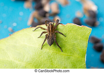 Spider sitting on a green leaf