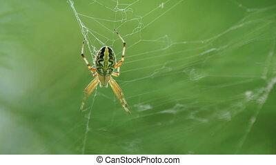 Spider sitting on its web. Kemer, Turkey.