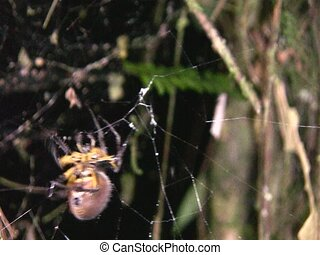 Spider spinning a web