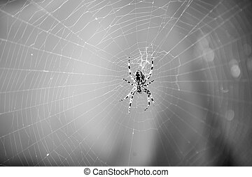 Spider spinning web in nature on blurred blue background