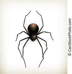 Spider, vector