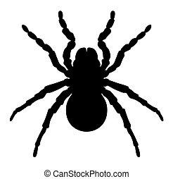Spider - Vector illustration of spider silhouette on white ...