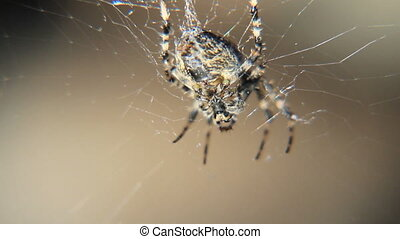 Spider view