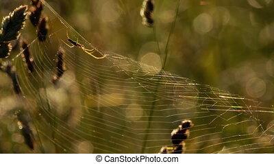 Spider weaves a web - Spider Garden-spider on a web