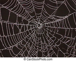 A fine web made by an industrious spider wet with the morning dew.