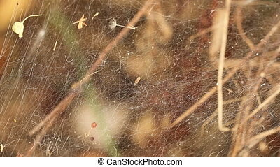 spider web. background macro