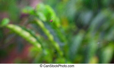 Spider web - Barely visible spider web with the spider in...