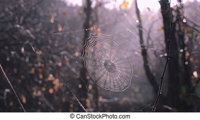Spider web between forest trees. Sun is shining through the...