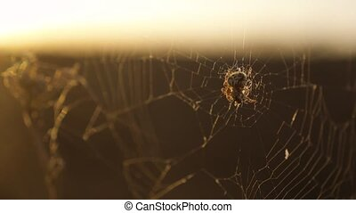 spider web cobweb on the sunset insect lifestyle...