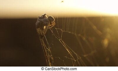 spider web cobweb on the sunset insect varicoloured insect...