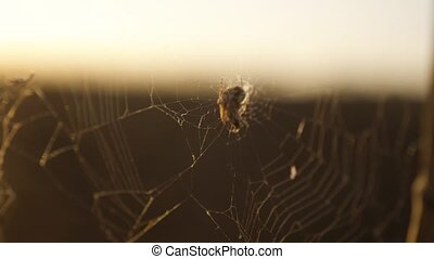 spider web cobweb on the sunset insect varicoloured insect background. the spider lifestyle hunts nature concept