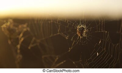 spider web cobweb on the sunset insect varicoloured...