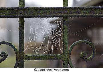 Spider web covered with hoarfrost on an old iron fence