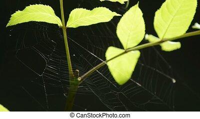 Spider web in a bush