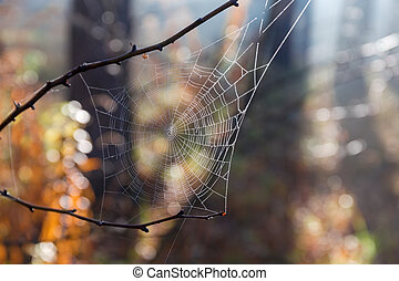 Spider web in autumn forest with dew close-up